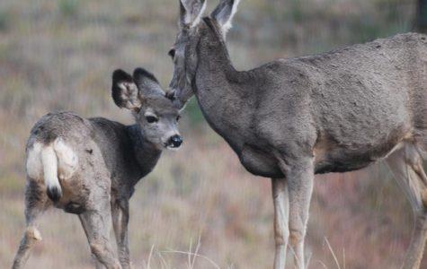 Missouri Hunting Seasons