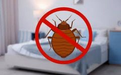 Local Bed Bug Outbreak