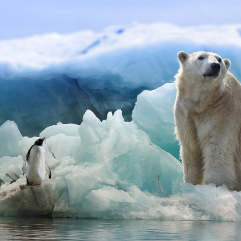 Climate change can affect multiple species of mammals and their ecosystems.
